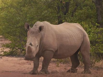 Rhino_InSocial_1-1024x768-1